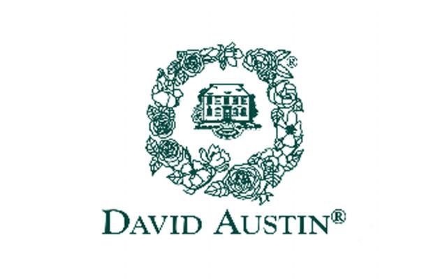 <em>デビッドオースチン</em>オールドローズとモダンローズ、それぞれの優れた特徴を取り入れて、さらに優美で、香り高いバラを追求して誕生したのがイングリッシュローズです。<b>お買いもの</b>