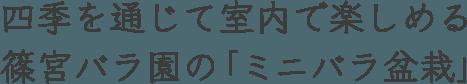 四季を通じて室内で楽しめる 篠宮バラ園の「ミニバラ盆栽」