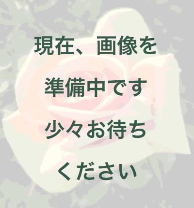 【新苗4号ポット】マグレディス ゼム(自家栽培の健康台木使用)