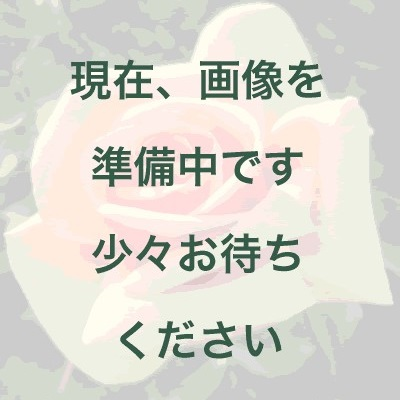 【新苗4号ポット】カトリーヌ ドゥヌーブ(自家栽培の健康台木使用)
