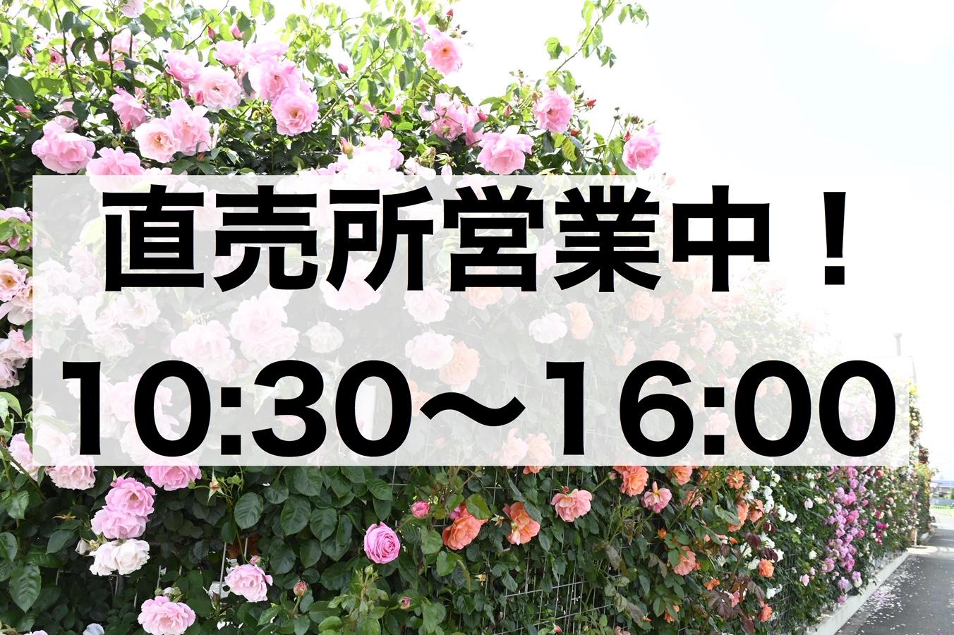 <em>直売所の営業について</em>篠宮バラ園の直売所は、4月5月6月のみの営業です。(秋苗、冬苗は直売所でも通販でもやっておりませんので、お買い忘れが無いようご注意ください!)<b>お知らせ</b>