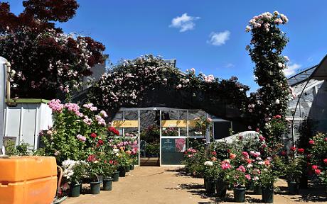 <em>春限定 生産直売所 4月9日(火)OPEN!!</em>2019年お持ち帰り特別価格、交通のご案内もこちらから♪<br>※写真は4月下旬~5月上旬の様子。咲きごろもそのころです。<b>お知らせ</b>