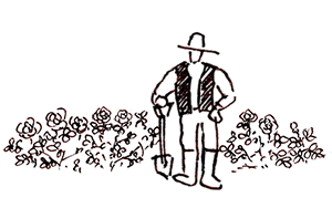 <em>園主厳選</em>園主オススメのバラの他、40年の思い入れのあるバラをご紹介します。<b>お買いもの</b>